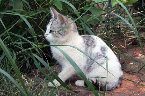 ¿Qué es el método CES de gestión de colonias felinas?