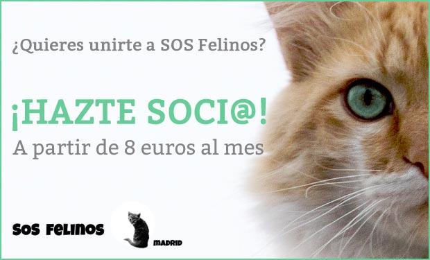 Hazte socio de SOS Felinos