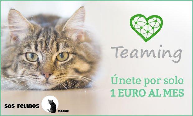 Teaming, únete por 1 euro al mes