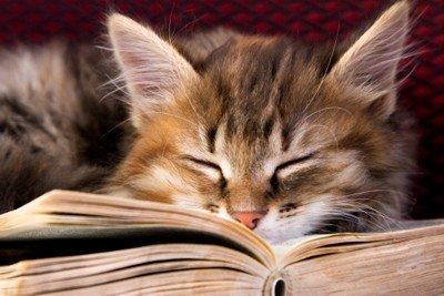 La literatura y los animales