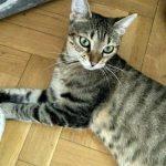 Nora en adopción SOS Felinos