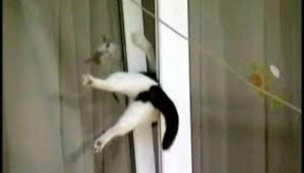 Gato atrapado en ventana