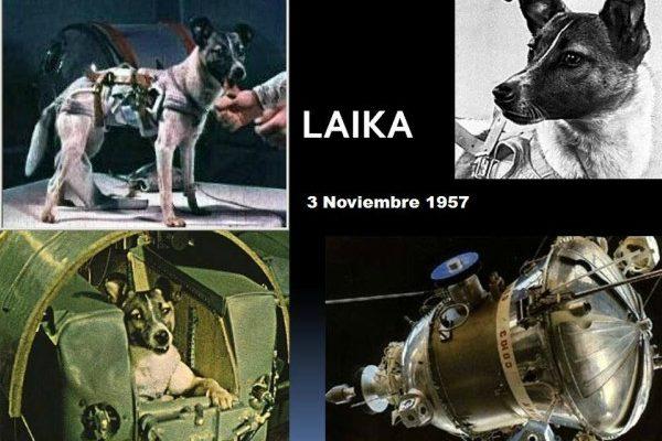 Laika, víctima de la maldad humana