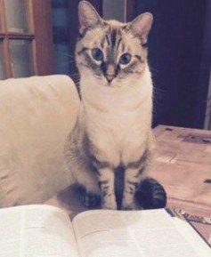 La literatura y los animales (3)