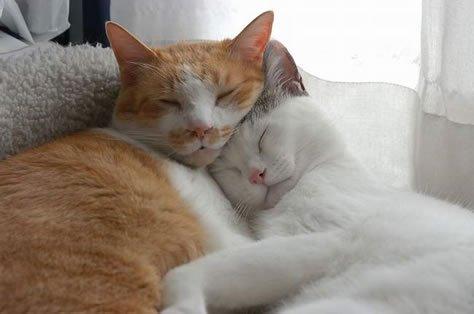 Dos gatos mejor que uno
