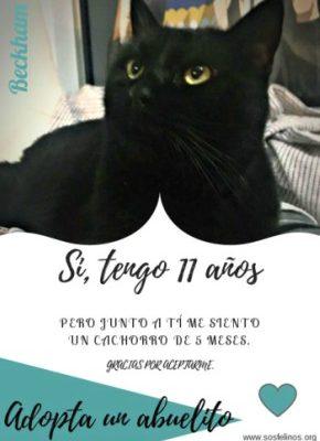 Adoptar un gato mayor