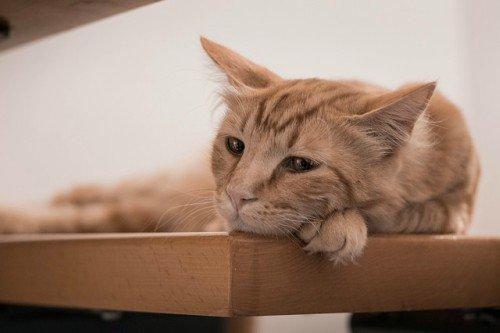 Las necesidades medioambientales felinas