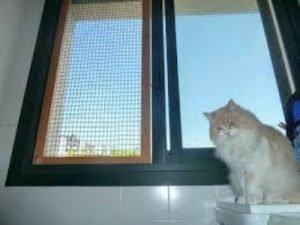 Cómo Proteger A Tu Gato De Las Caídas Desde Ventanas Sos Felinos Madrid