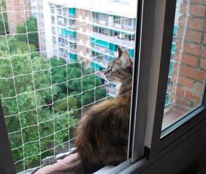 Cómo proteger a tu gato de las caídas desde ventanas