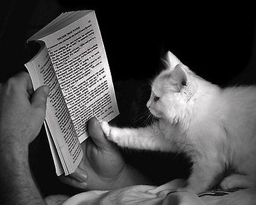 Oda al gato