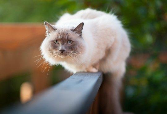 Cómo proteger a tu gato de las caídas desde terrazas y balcones