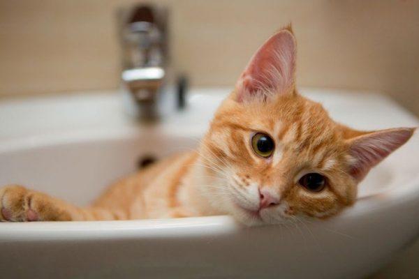 Golpes de calor en los gatos