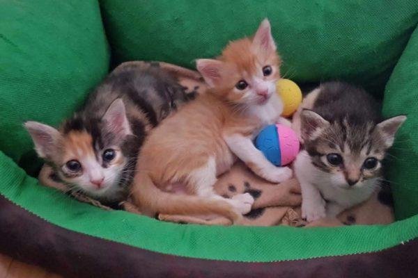 Max, Kika y Luna