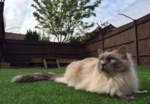 Acondicionamiento de patios y jardines: Evitar las escapadas de los gatos
