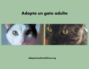 Adopta un adulto, pon tu mirada en un invisible