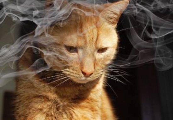 La salud del gato «fumador»
