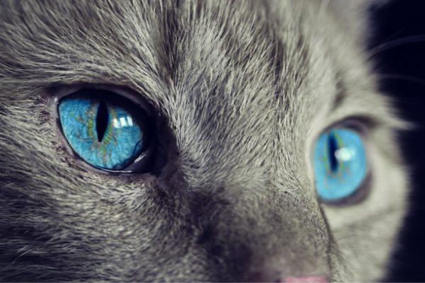 Elko y Triky, y el Día Internacional del Gato