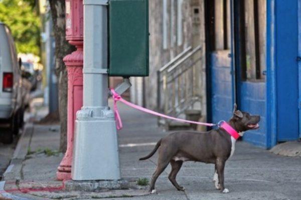 Perros que esperan fuera….. irresponsabilidad humana