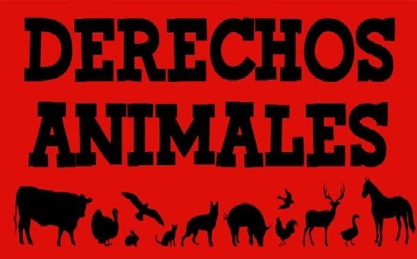En nuestra biblioteca de los animales ……