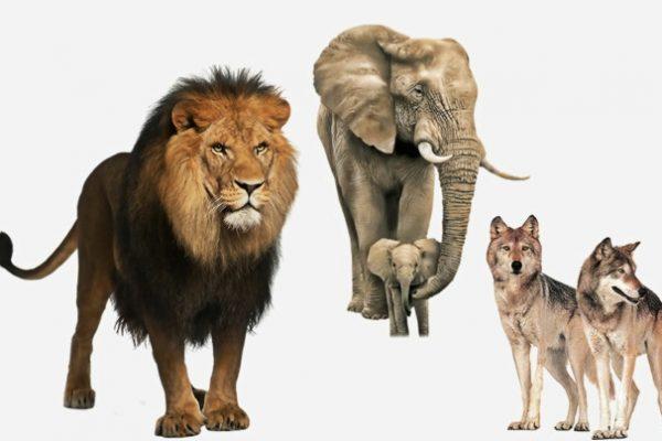 Lo que piensan y sienten los animales