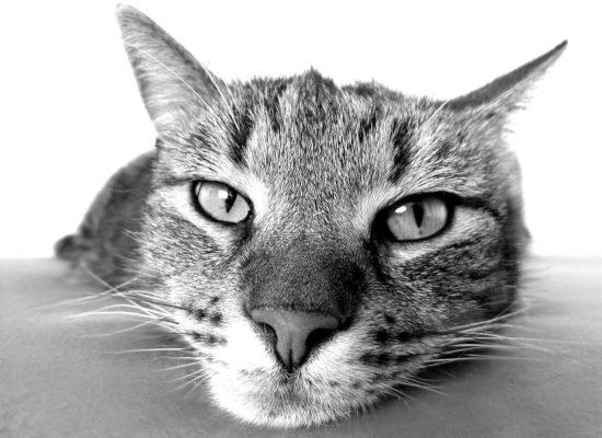¿Cómo piensa tu gato?