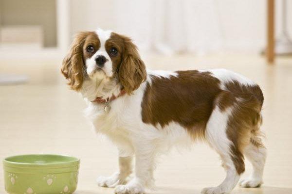 H´ills: Recogida voluntaria de latas para perros por niveles potencialmente elevados de vitamina D