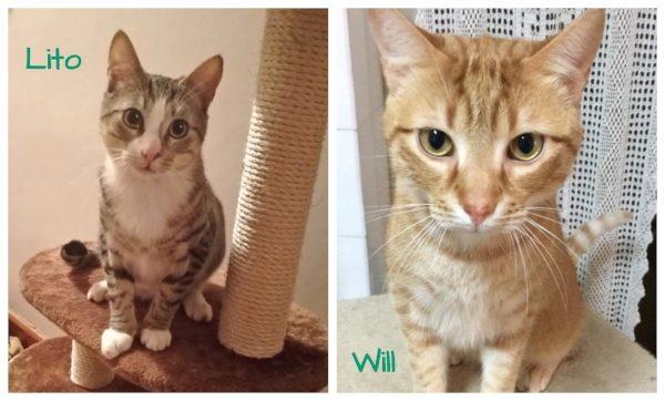 Will y Lito