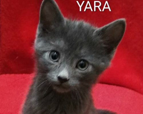 Yara (Preadoptada)