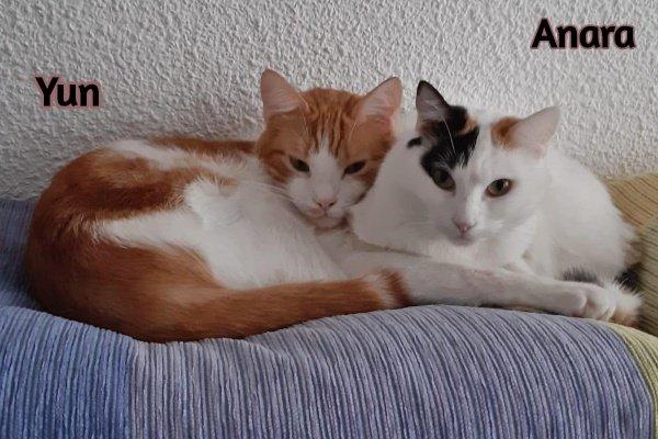 Anara y Yun
