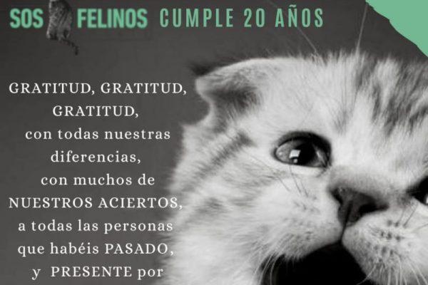 SOS Felinos cumple 20 años