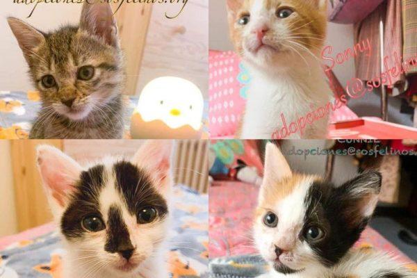 Sonny, Fredo, Connie y Mike