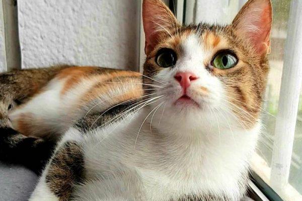 Yumi (preadoptada)
