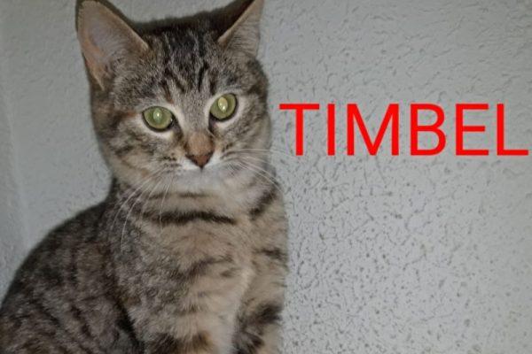 Timbel