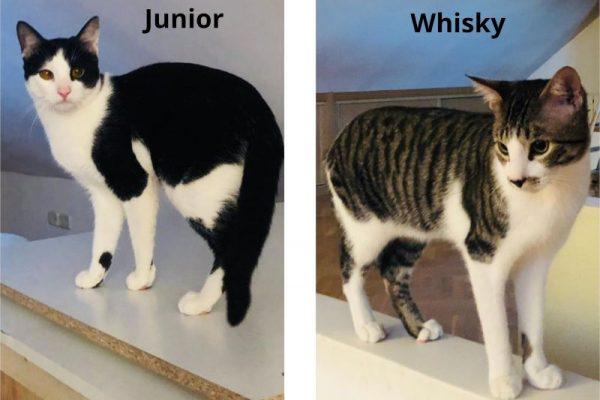 Whisky y Junior (preadoptados)