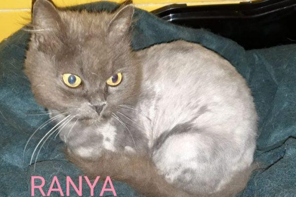Ranya