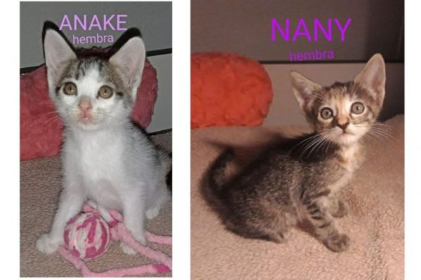 Nany y Anake