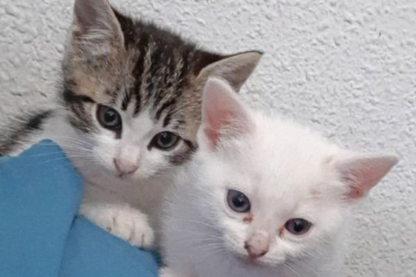 Bebé y Silver