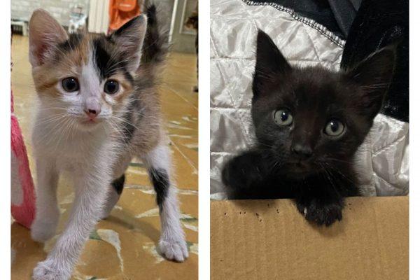 Freya y Salem