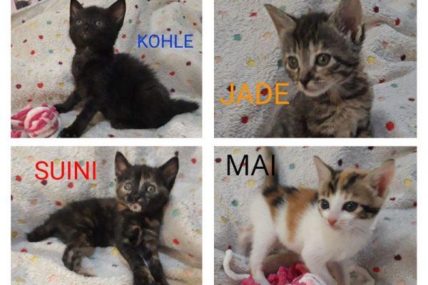 Jade, Kohle, Suini y Mai
