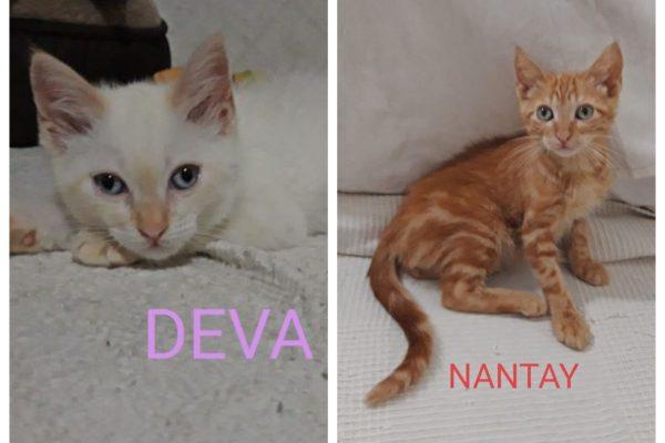 Deva y Nantay