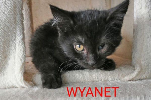 Wyanet