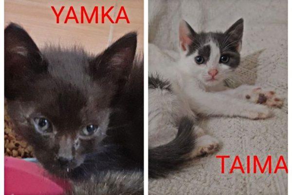 Yamka y Taima (preadoptadas)
