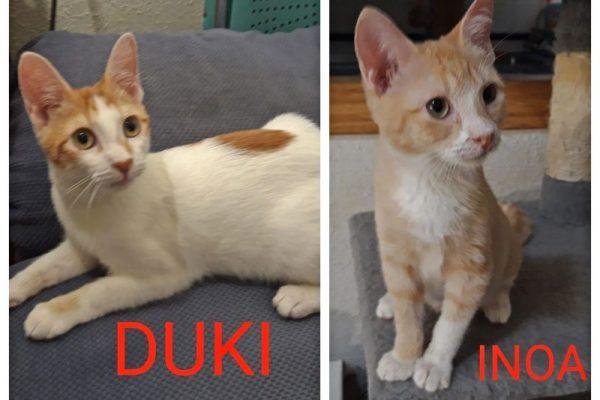 Inoa y Duki