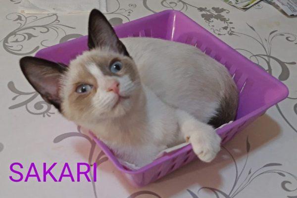 Sakari